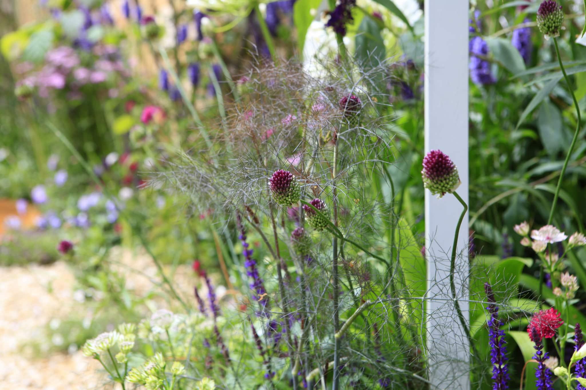 Rich Clark Garden Design Photo